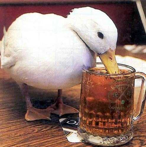 The Shot Duck: I have no intention of allowing this blog to degenerate into ...