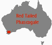 location of red-tailed