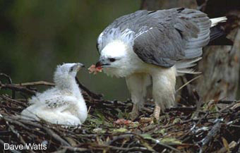feeding its chick